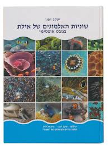שונית האלמוגים של אילת