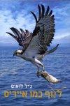 לעוף כמו אייריס
